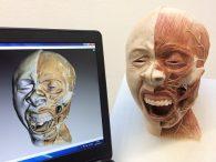 Rekonstrukcja anatomiczna – Skanowanie 3D kości - Czaszka