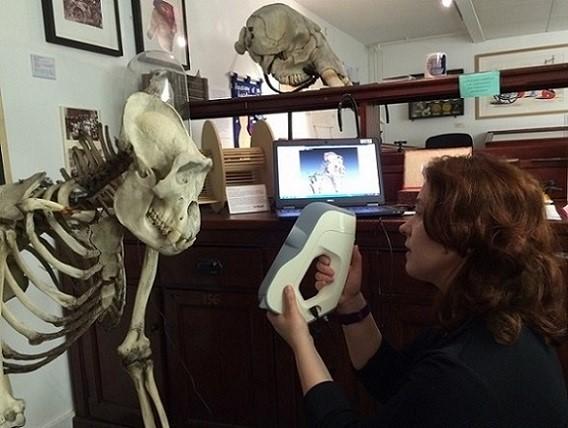 Rekonstrukcja anatomiczna – Skanowanie 3D kości - Archeologia