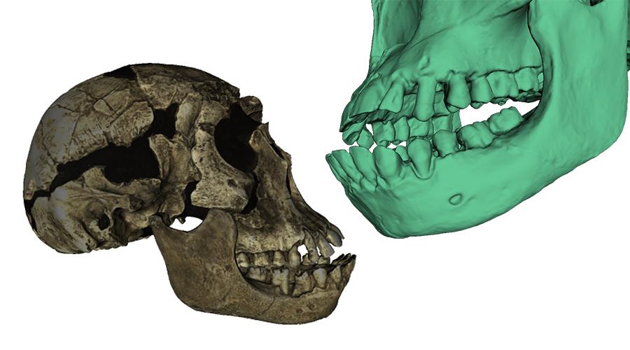 Skan 3D czaszki - archeologia